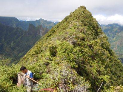 Brad Balukjian (UC Berkeley, now Laney College), on Mt. Marau, Tahiti, Society Islands, 2011