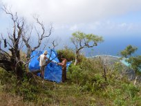 Jean-Yves and Élie set up camp on Mt. Fairurani, Mo'orea, Society Islands, 2011