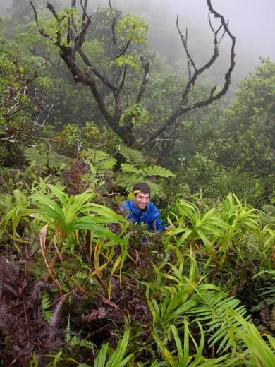 Mt. Temetiu-Feani, Hiva Oa, Marquesas Islands, 2007. Photo: Jean-Yves Meyer