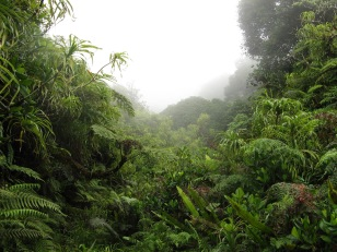 Cloud forest, Mt. Temetiu-Feani, Hiva Oa, Marquesas Islands, 2007