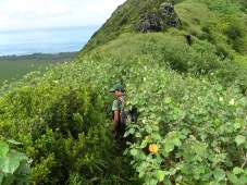 Jean-Yves in native forest remnants on Tubuai, Austral Islands, 2008