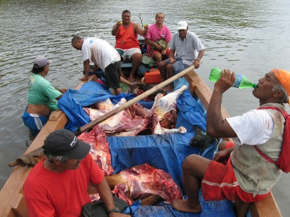 Feral cattle hunting, Rapa, Austral Islands, 2008