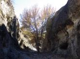 Fresno Canyon, Sonoita Creek State Natural Area, Arizona