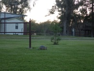 Armadillo at the bunkhouse, Trinity River NWR, Texas