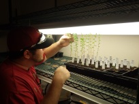 Jeff checks on leafflowers in the lab at UA. May 2017